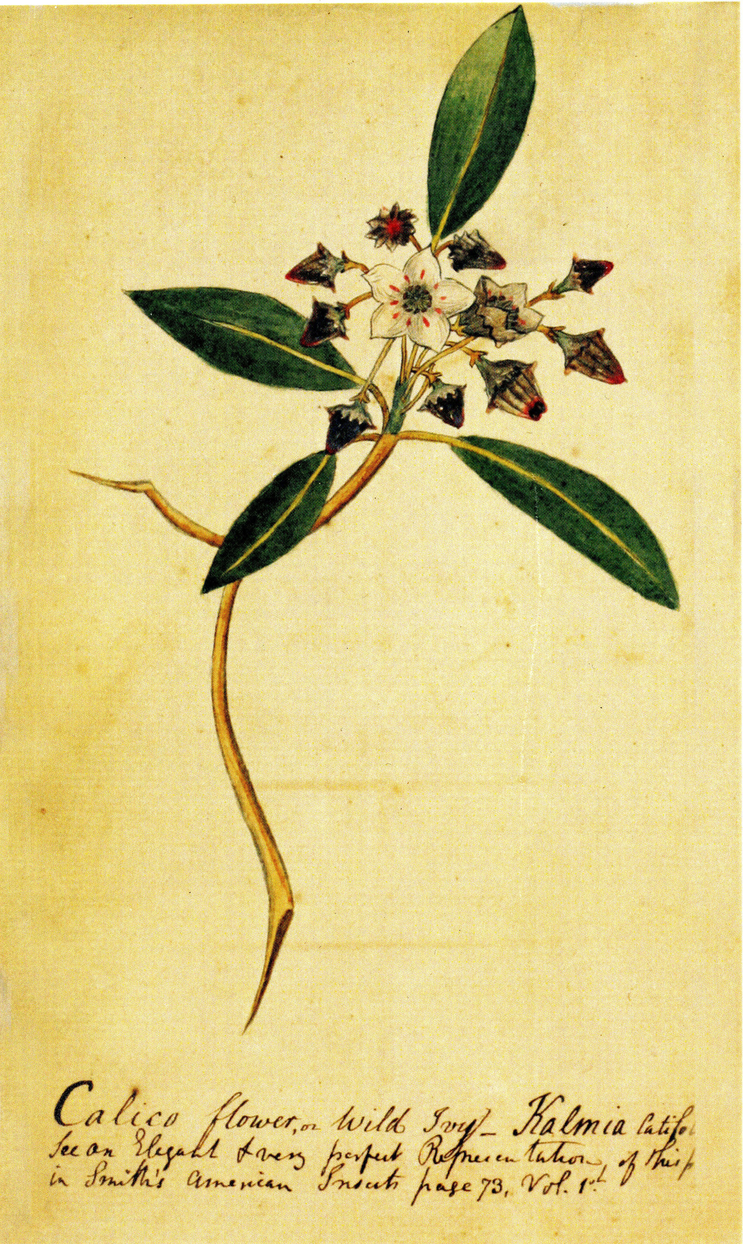 """The Carolinian Florist"" of Governor John Drayton of South Carolina"